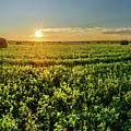 Sunset Over Prince Edward Island Clover by Chris Bordeleau