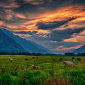 Sunset Over The Pasture by Dave Steers