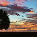 Sunset Palm Florida by Ken Figurski