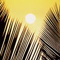 Sunset Palm Fronds by Joe Carini - Printscapes
