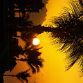 Sunset Palm by Randall Slinkard