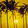 Sunset Palms And Family by Carl Shaneff - Printscapes