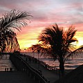 Sunset Palms At Sharky's On The Pier by Jynjer Jones