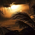 Sunset Palms by Colleen Fox