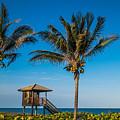 Sunset Palms Delray Beach Florida by Lawrence S Richardson Jr