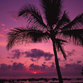 Sunset Palms by Ron Dahlquist - Printscapes