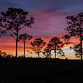 Sunset Pines by Paul Rebmann