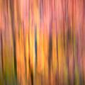Sunset Pond Trail 3 by Julius Reque