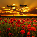 Sunset Poppies Fighter Command by J Biggadike