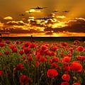 Sunset Poppies The Bbmf by J Biggadike