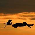 Sunset Race by Robert Wilder Jr