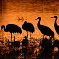 Sunset Reflections Of Cranes And Geese by Max Allen