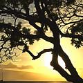 Sunset Revival by Krissy Katsimbras
