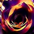 Sunset Rose by Robert Knight