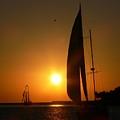 Sunset Sail by Deborah Carroll