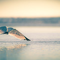 Sunset Seagull Takeoffs by T Brian Jones