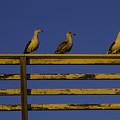 Sunset Seagulls by Garry Gay
