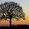 Sunset Silhouette by Clare Bambers