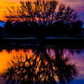 Sunset Silhouette by Joy McAdams