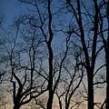 Sunset Silhouette by Steve Gadomski