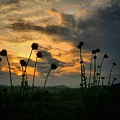 Sunset Silhouettes In June by Maria Urso
