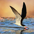 Sunset Skimming by Donna Kennedy