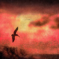 Sunset Soaring II by William Beuther