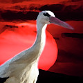 Sunset Stork by Cliff Norton