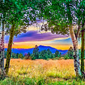 Sunset Through The Birch Trees by Bob and Nadine Johnston