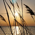 Sunset Through The Dune Grass by Bill Cannon
