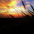 Sunset Through The Sea Grass by Sakki