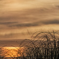 Sunset Through The Seagrass by Lindley Johnson