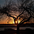 Sunset Through The Tree by Rod Lindley