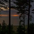 Sunset Through The Trees by Pravin  Sitaraman
