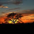 Sunset Tree by Burt Plotkin