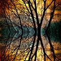Sunset Tree Silhouette Abstract 3 by James BO  Insogna