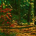 Sunset Walk by Michael Durst