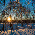 Sunset Winter Shadows by Alex Papp