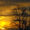 Sunset With Backlit Trees by Ginger Repke