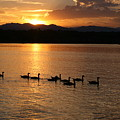 Sunset With Geese 2 by Angie Wingerd