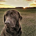 Sunset With My Good Boy Brownie  by Pamela Long