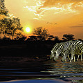 Sunset Zebras At The Watering Hole by Diane Schuster