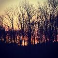 Sunsets by Nicole Prohaska
