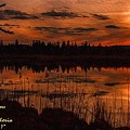 Sunsettia Gloria Catus 1 No. 1 L A. by Gert J Rheeders