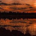 Sunsettia Gloria Catus 1 No. 1 L B. by Gert J Rheeders