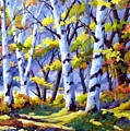 Sunshine And Birches by Richard T Pranke