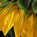 Sunshine by B Vesseur
