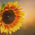 Sunshine by David and Carol Kelly