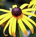 Sunshine Flower by Mary Haber