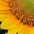 Sunshine In A Flower by Shari Jardina